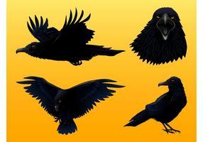 Crow Graphics Set
