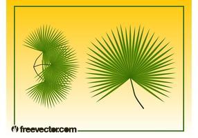 Gráficos de folhas de palmeira