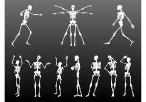 Menschliche Skelette Set