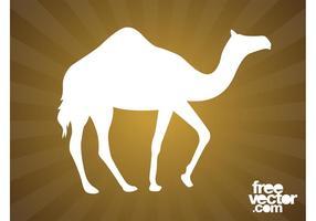 Gå kamel silhuett