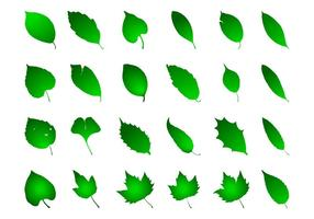 Green Leaves Graphics Set