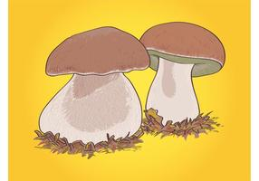 Boletus mushrooms graphics
