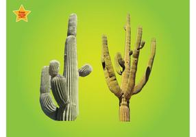 Kaktus-Grafiken