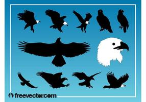Eagles gráficos vectoriales