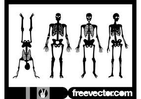 Human Skeletons Graphics