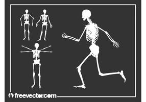Vector-skeletons-graphics