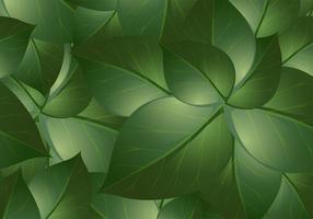 Vecteurs de fond de feuilles vertes