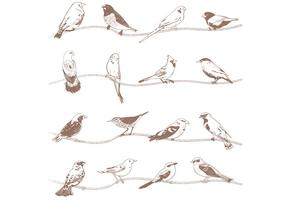 Vectores dibujados a mano de las aves