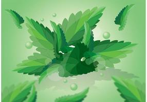 Green Mint Leaves Vector