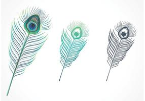 Libre Aislado Peacock Feather Vector