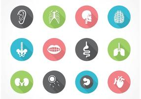 Gratis Vector Human Anatomy Icon Set