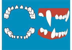 Dentes de vetor e gengivas