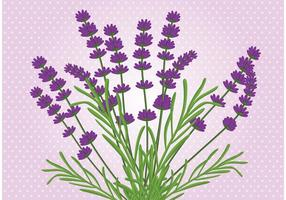 Vector de fleurs de lavande
