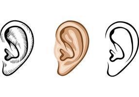 Menschliche Ohren Vektoren