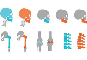 Orthopedic Bones and Joints Vectors