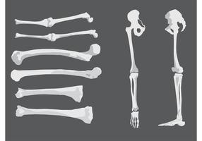 Huesos humanos libres del vector