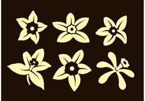 Flores de vainilla vector