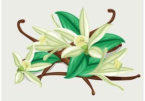 Vecteur de fleurs de vanille