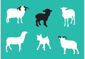 Sheep Isolated Vectors
