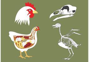 Vetores de osso de galinha