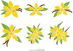 Vectores de la flor de la vainilla