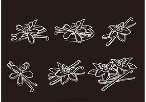 Chalk Drawn Vanilla Flower Vectors