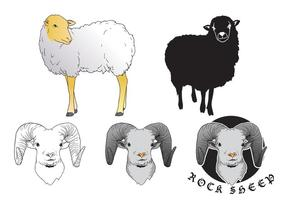 Sheep-isolated-vectors