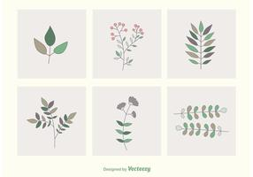 Leaves-branches-vectors