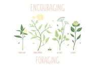 Foraging Spring Herb Vectors