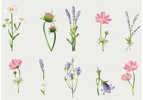 Collection de vecteurs de fleurs