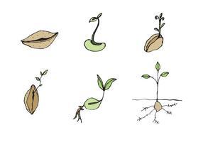 Freie Seed Vector Serie