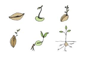 Free Seed Vector Series