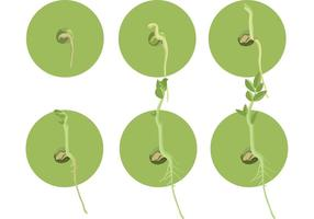 Seed Vectors