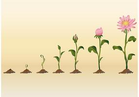 Wachsende Blumenvektoren