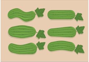 Vecteurs de concombre