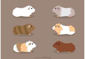 Guinea Pigs Vectors