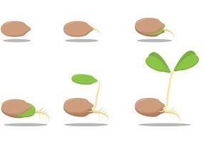 Growing Seed Vectors