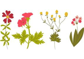 Vecteurs de fleurs sauvages dessinés à la main