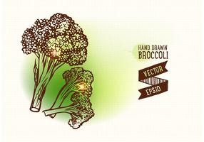 Mano libre dibujado brócoli ilustración vectorial