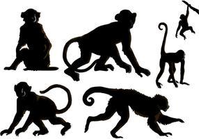 Os vetores do macaco