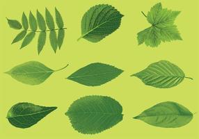 Vecteurs de feuilles réalistes vecteur