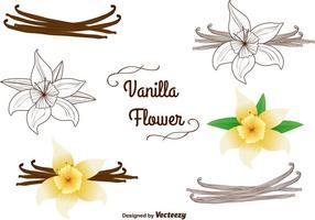 Vainilla flores vectores conjunto