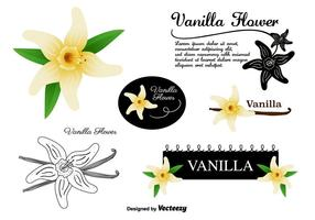 Vanilla Flower Vectors Set