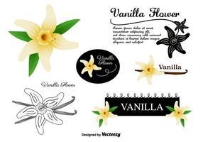 Conjunto de vetores de flores de baunilha