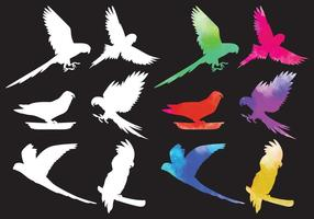 Vetores de silhueta de aves tropicais