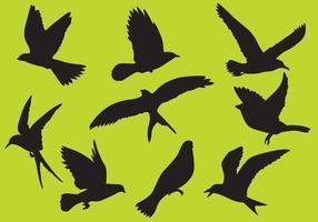 Vecteurs d'oiseaux