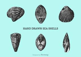 Free Hand Drawn Shells Vektor