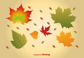 Vectores realistas de las hojas de arce