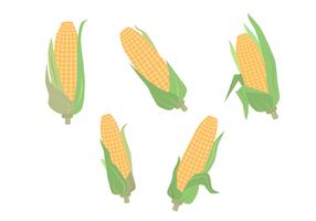 Vector libre de espiga de maíz
