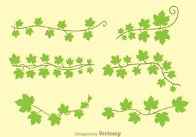 Vettori di edera verde